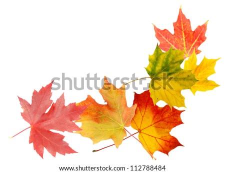 Autumn leaves decorative