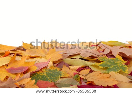 Autumn leaves different colors.