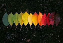 Autumn leaves displayed in a creative way, with eye pleasing aesthetic.