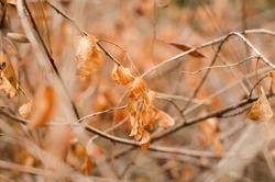 autumn leaves fall down hang