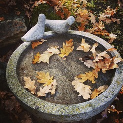 Autumn leaves fallen on a beautiful stone sculpture with birds