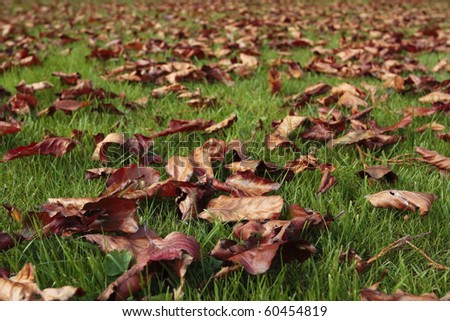 Autumn leaves fallen on grass lawn