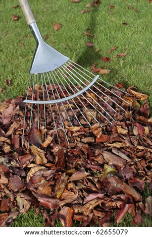 Autumn leaves fallen on grass lawn with rake - stock photo