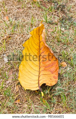 Autumn leaves fallen on grassland