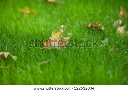 Autumn leaves fallen on green grassland