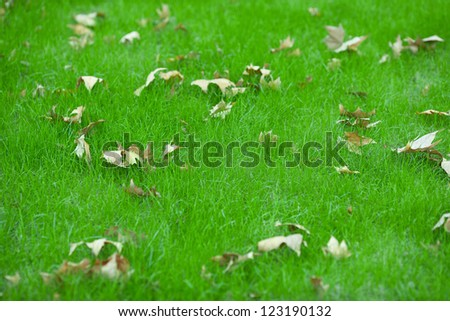Autumn leaves fallen on green grassland