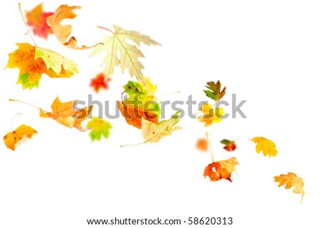 Autumn leaves falling and spinning isolated on white