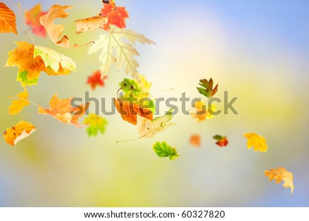 Autumn leaves falling and spinning on natural background
