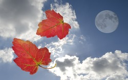 autumn leaves falling before a moon and bright sky