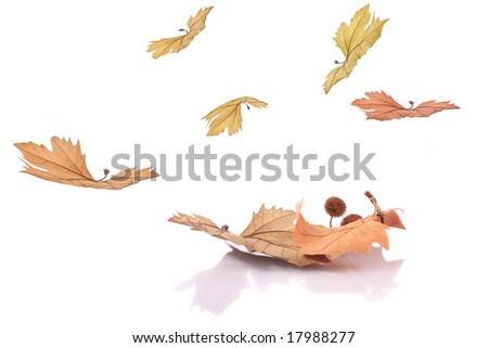 Autumn leaves falling on ground, isolated on white (arriving autumn).