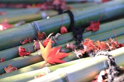 Autumn leaves falling on the bamboo lid of a well