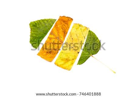 Autumn leaves flat lay - Shutterstock ID 746401888
