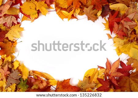 autumn leaves (frame) background