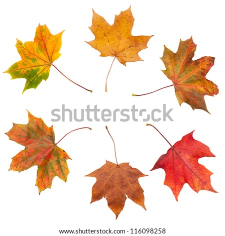 Autumn leaves in a circle on white background