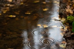 Autumn leaves in a puddle. Beautiful background with yellow leaves. Puddle circles. Autumn mood.