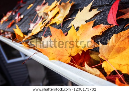 Autumn leaves in a rain gutter on a roof