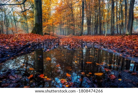 Autumn leaves in autumn water. Autumn forest river leaves fall