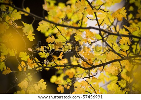 Autumn leaves in detail for autumn / fall background