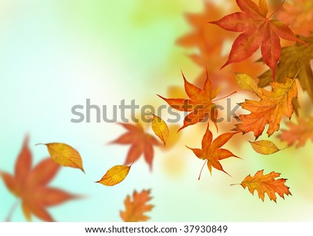 Autumn leaves in golden ambers and reds falling to the ground.