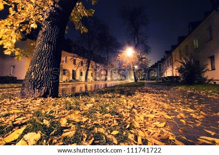 Autumn leaves in the city. Night scenery