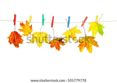 autumn leaves isolated #505779778
