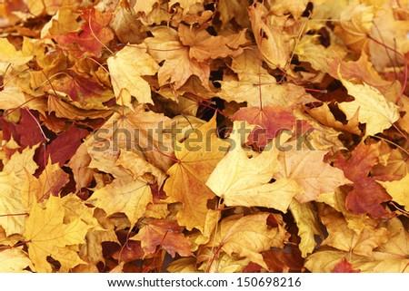 autumn leaves isolated in studio #150698216