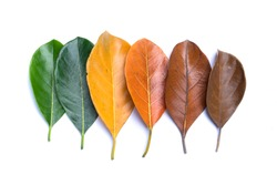 Autumn leaves isolated on white background. Season, colorful leaves concept.