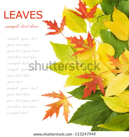 Autumn leaves isolated on white background with sample text