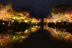 Autumn leaves Japan To-ji Pagoda in Kyoto at night