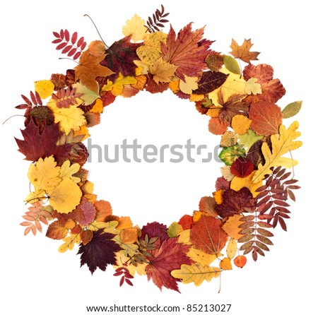 autumn leaves laid on a white background around