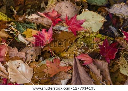 Autumn leaves leaves  #1279914133