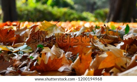 autumn leaves,leaves,color leaves,autumn,Leaves in the grass,autumn leaves in the grass,autumn leaves falling #1200194968