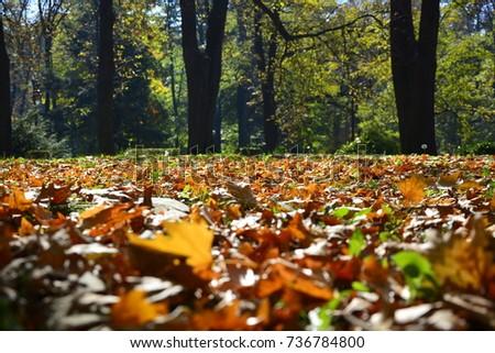 autumn leaves,leaves,color leaves,autumn,Leaves in the grass,autumn leaves in the grass,autumn leaves falling,dew drops,dew drops on autumn leaves,  #736784800