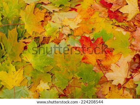 autumn leaves, multicolored background autumn theme