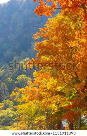 Autumn leaves of Hokkaido #1131911093