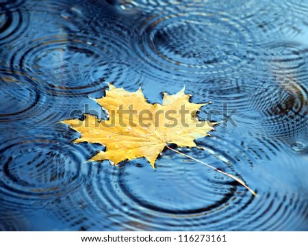 Autumn leaves of maple in the water
