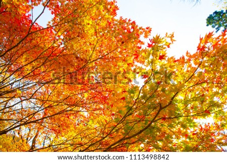 Autumn leaves of the Seseragito Highway #1113498842