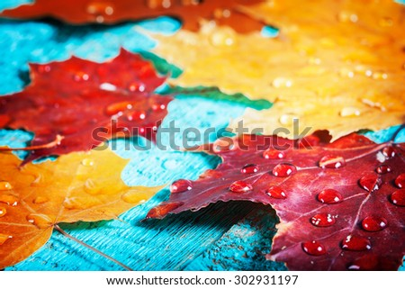 autumn leaves on a beautiful board. wet leaves after a rain. October and November leaves . background for photos . water drops. there is a place for an inscription. closeup