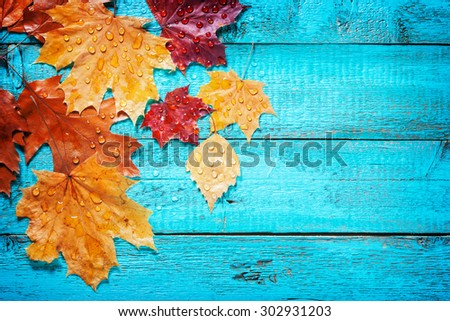 autumn leaves on a beautiful board. wet leaves after a rain. October and November leaves . background for photos . water drops. there is a place for an inscription. top view