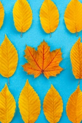 autumn leaves on a blue background, one leaf is different from the others - abstract vision be different, unique personality or standing out from the crowd, leadership quality