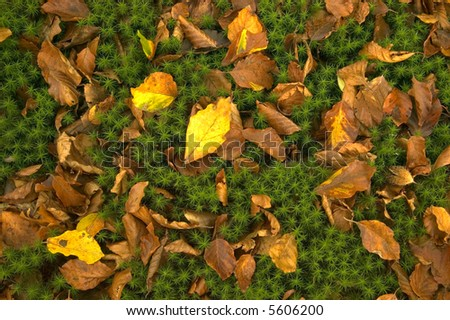 Autumn leaves on a moss background.