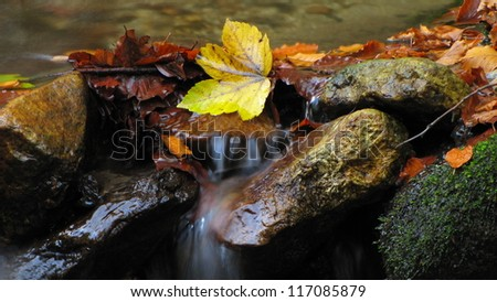 autumn leaves on a stones covered with moss in mountain stream