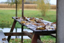 Autumn leaves on a table after a rain