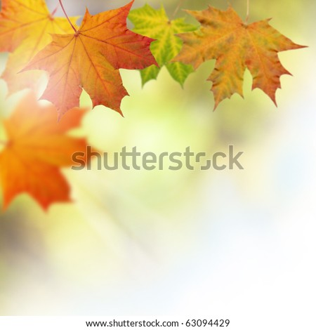Autumn leaves on a tree background