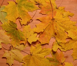 autumn leaves on a wooden background. thanksgiving and greeting card concept. copy space.