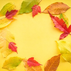 Autumn leaves on a yellow paper background. Frame from leaves. High quality photo