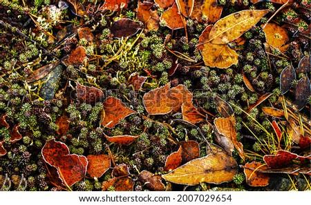 Autumn leaves on autumn soil. Autumn background. Autumnal background. Autumn leaves