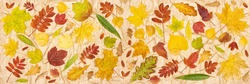 Autumn leaves on kraft paper. Top view, flat lay. Colorful tree fallen leaf pattern. Fall season banner background