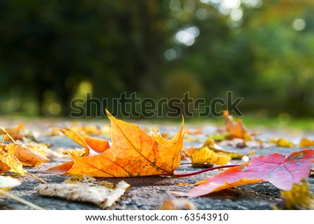 Autumn leaves on pavement - stock photo
