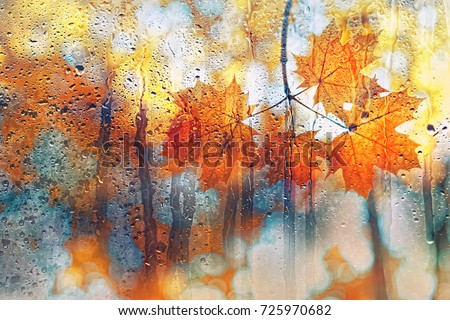 autumn leaves on rainy glass texture. concept of fall season. autumn background. orange maple leaves in rain. rainy day weather